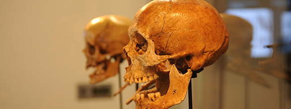 anthropology and its subfields Anthropology offers the opportunity to study human existence in the present and the past and to explore how and why humans vary in their behaviors, cultures and biology.